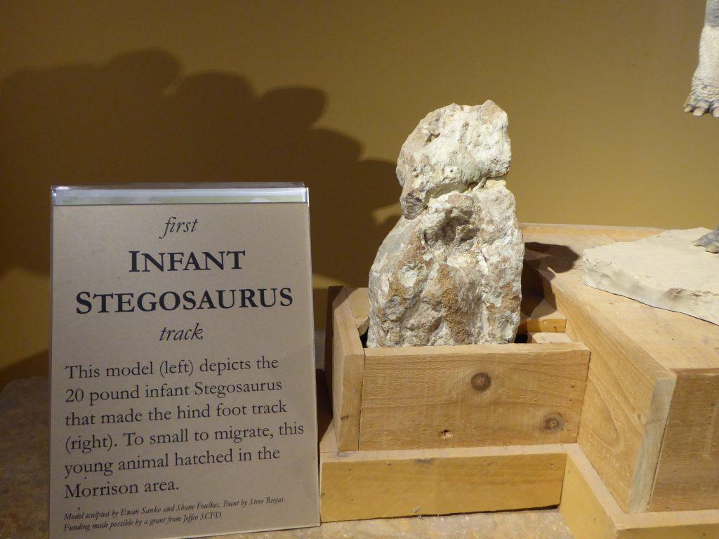 Morrison Natural History Museum Infant Stegosaurus