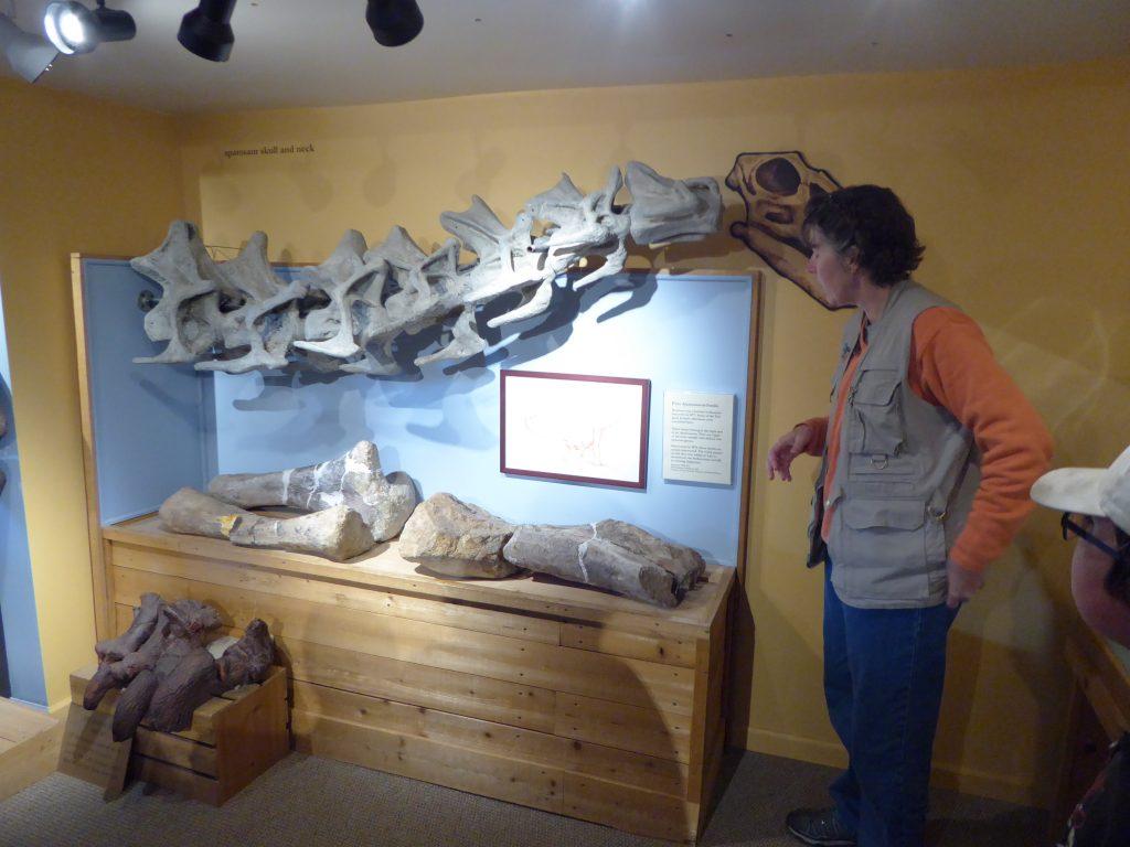 Morrison Natural History Museum Apatosaurus Ajax