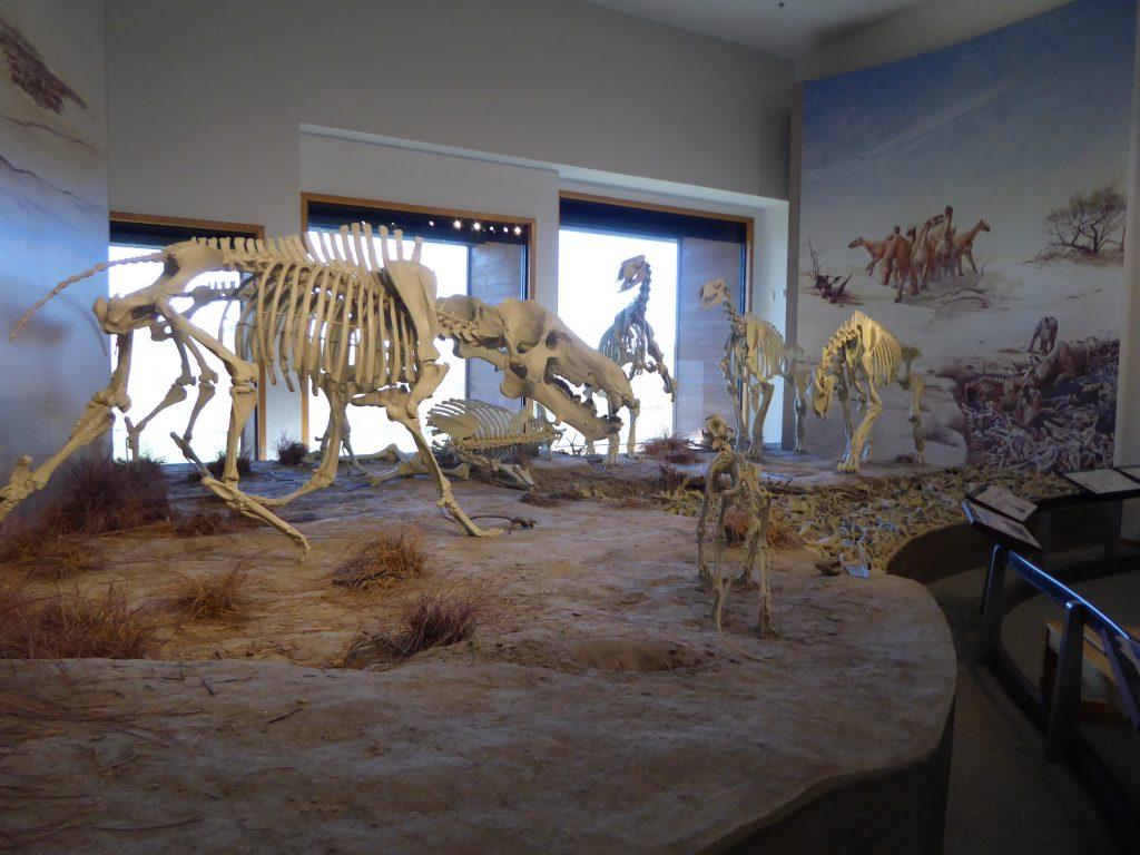 Vacation in Nebraska Fossils