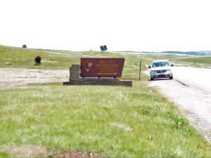 National Parks of South Dakota Bison roam free at Wind Cave
