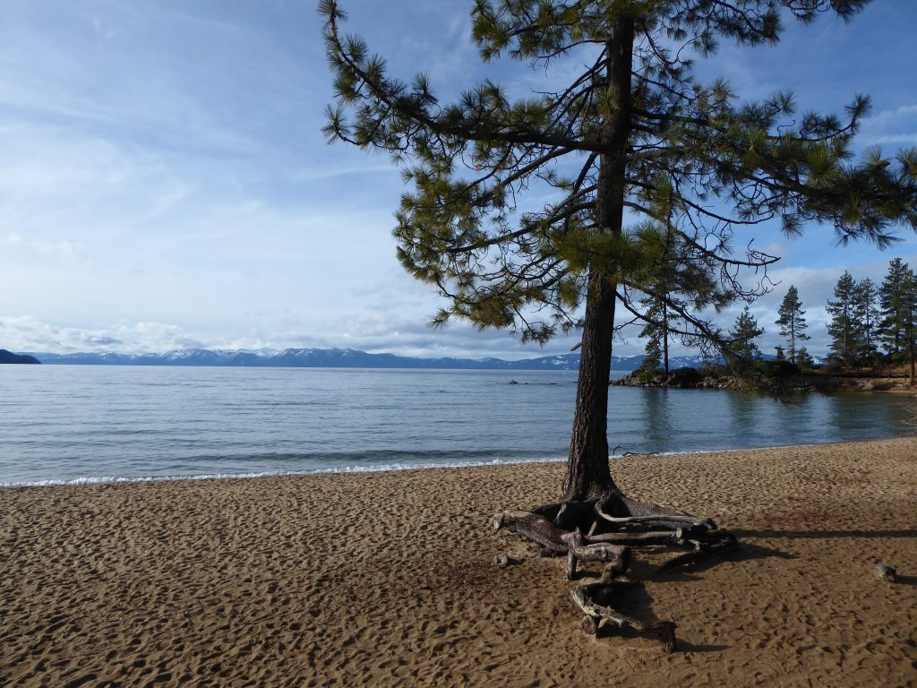 Trees, Mountains, and Lake Tahoe
