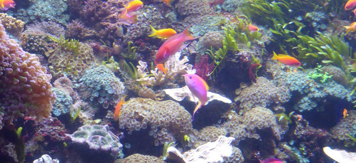 Dive into Fun at Denver's Downtown Aquarium