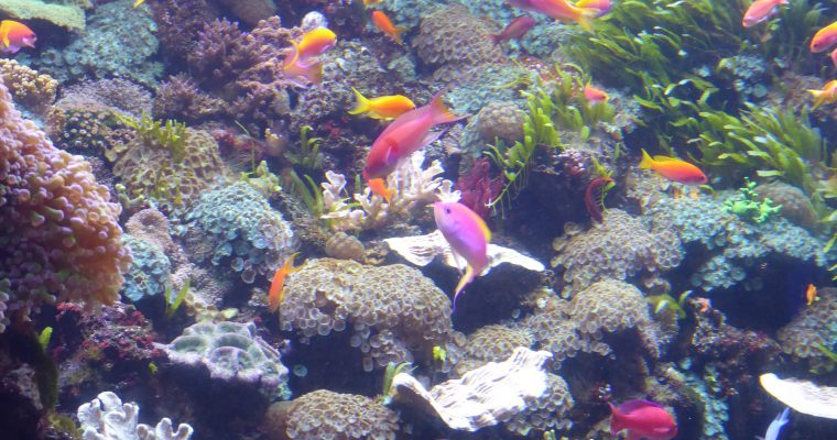 Dive into Fun at Denver's Downtown Aquarium