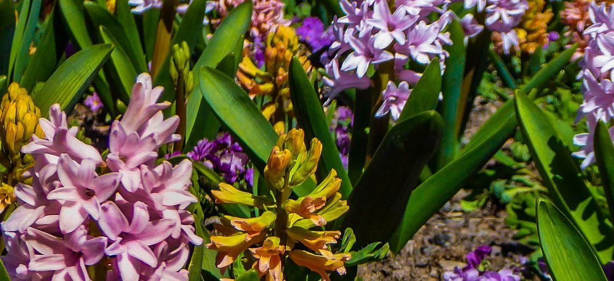 "Take Time to Smell the ""Stinky Flower"" at Denver Botanic Gardens"