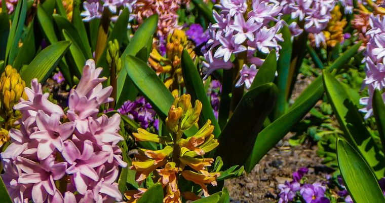 "Take Time to Smell the ""Stinky Flower"" at Denver Botanic Gardens"