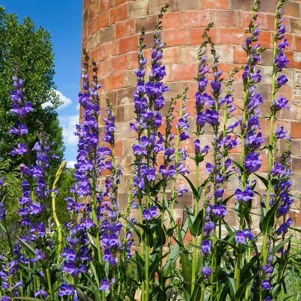 Denver Botanic Gardens Silo