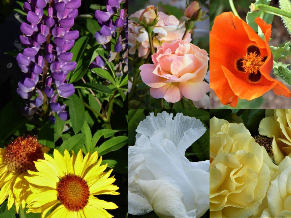 Denver Botanic Gardens Blooms
