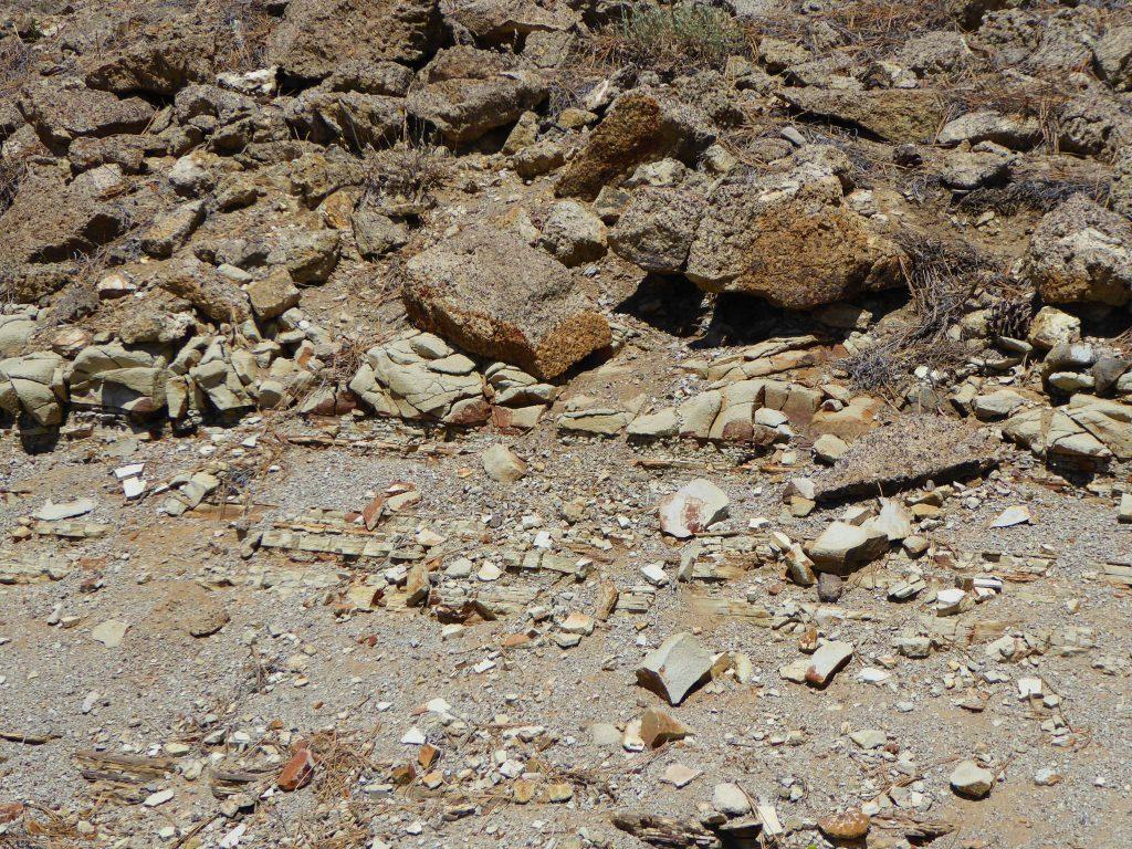Florissant Fossil Beds Shale