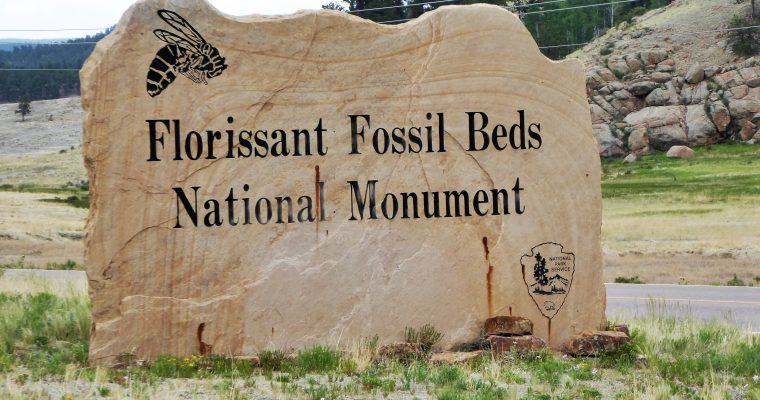 Even Walt Disney Visited Florissant Fossil Beds National Monument