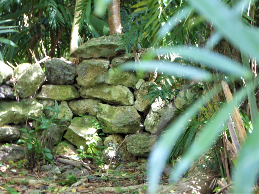 Mayan Ruins of San Gervasio Foliage and Ruins