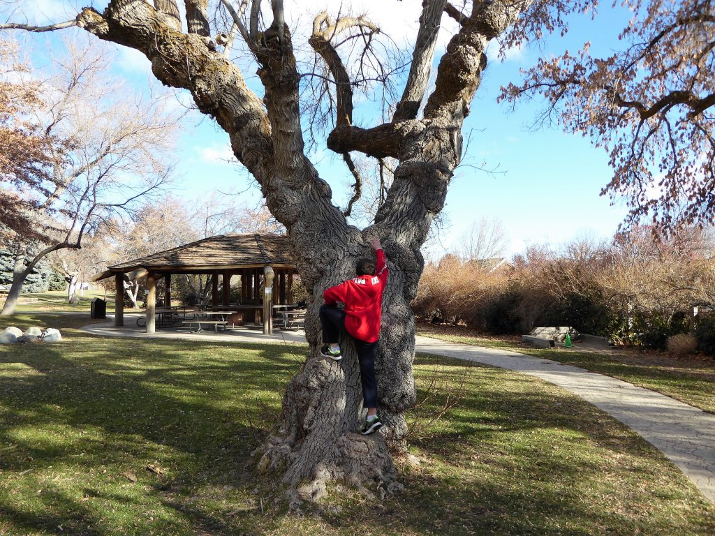 Family Friendly Northern Nevada Mormon Station Tree