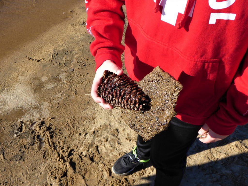 Kings Beach Lake Tahoe Frozen Pine Cone