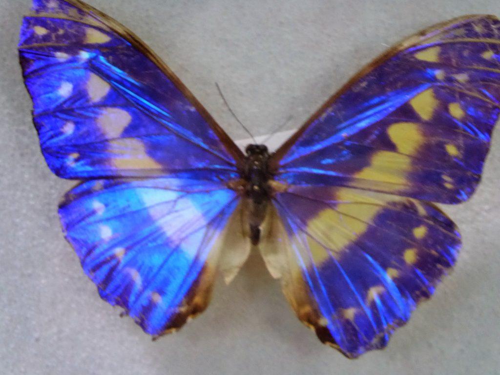 Gumbalimba Park Roatan Island Butterfly