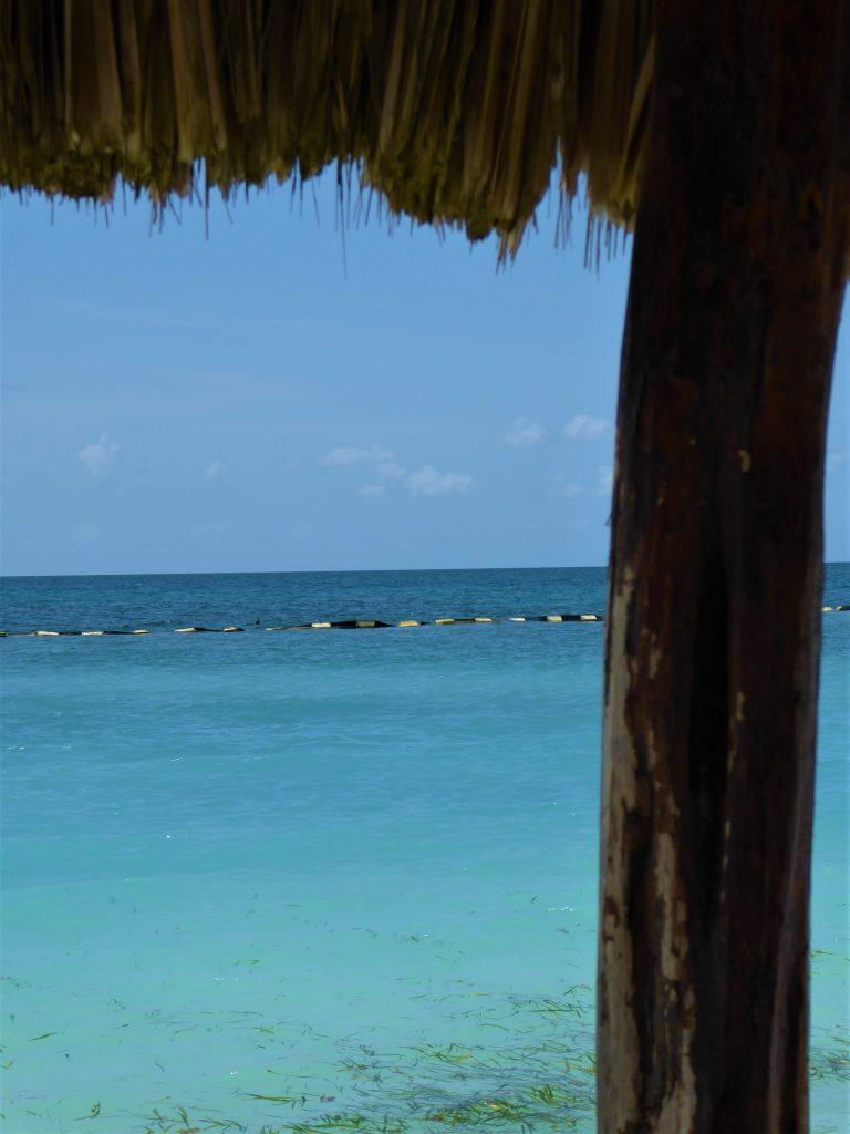 Starfish Island Belize Caribbean Sea