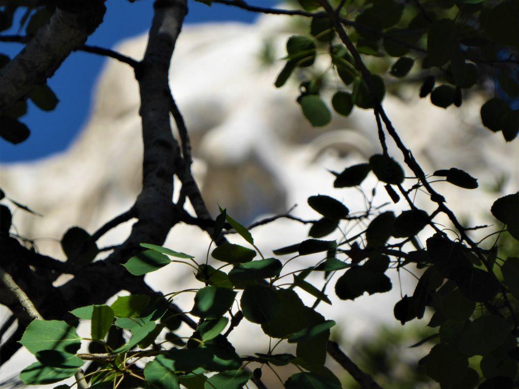 Jefferson through the Trees