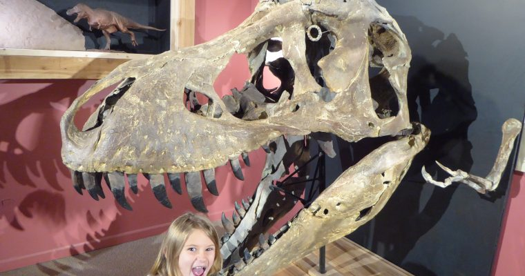 You Can Touch Dinosaur Bones at the Morrison Natural History Museum