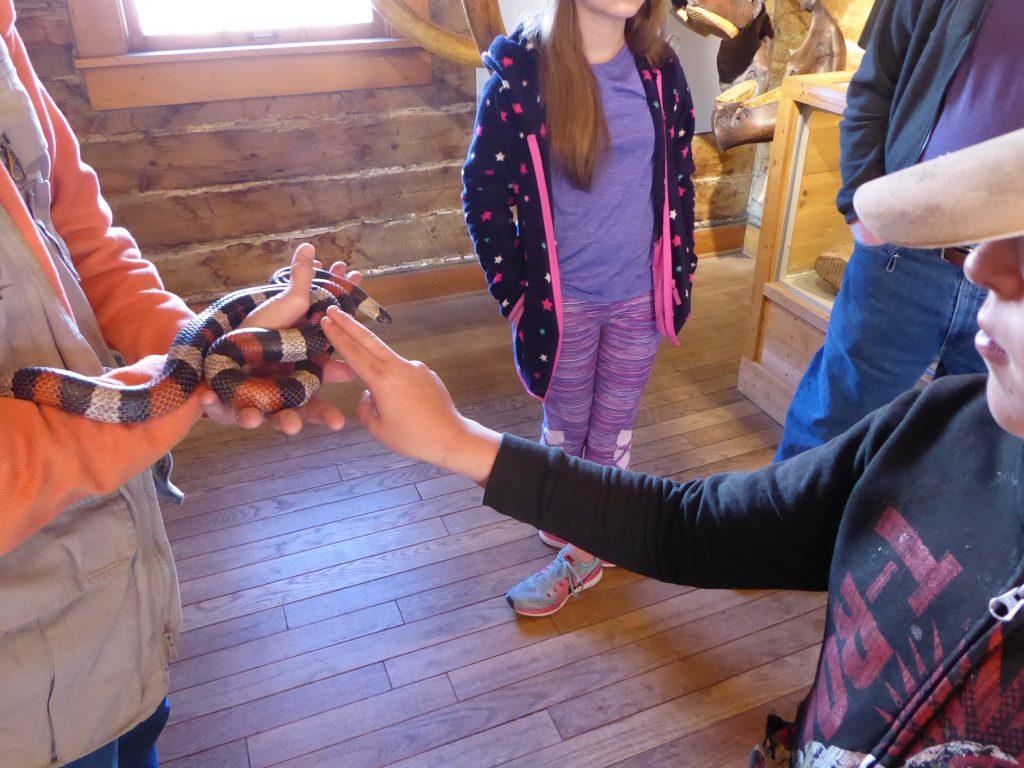 Morrison Natural History Museum Milk Snake