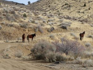 Horses of Virginia City