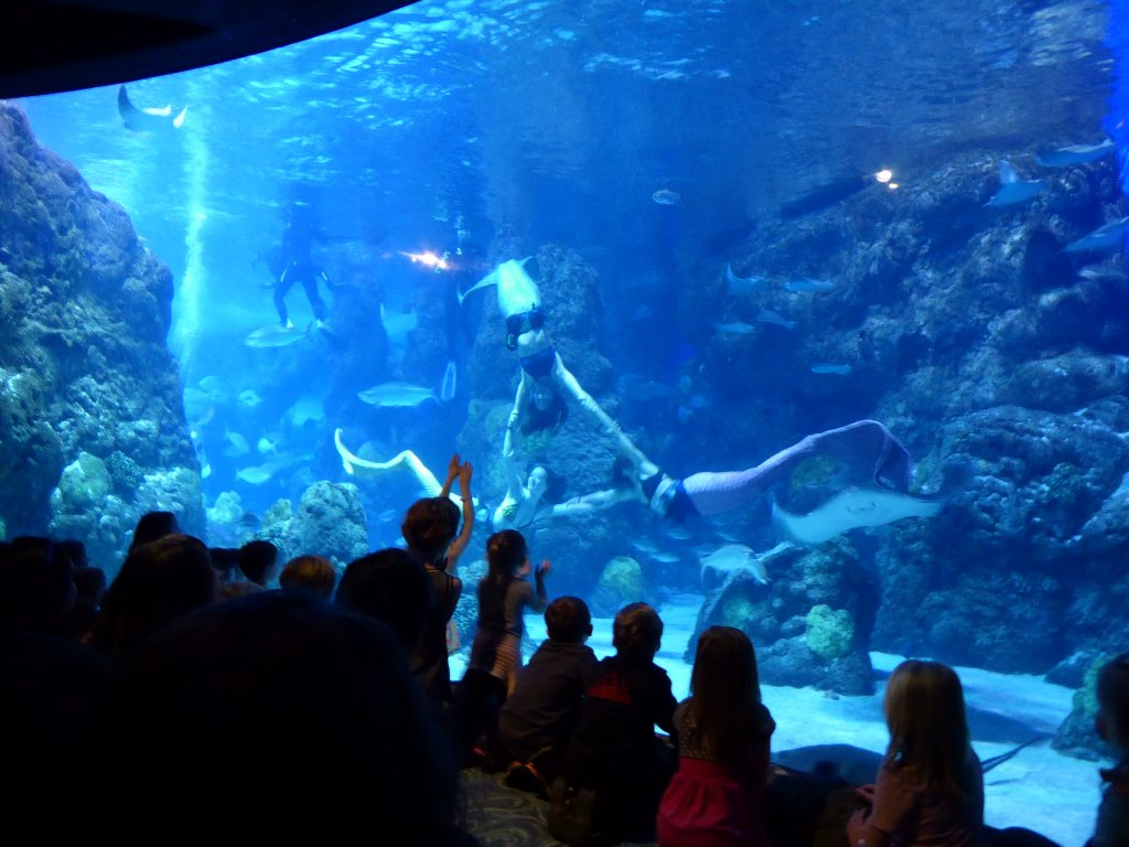 Mermaid Show at Denver Aquarium