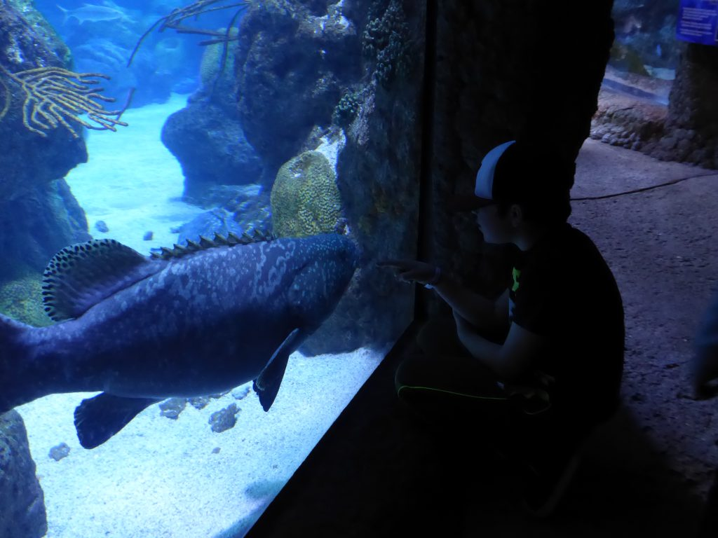 Sea life at Aquarium