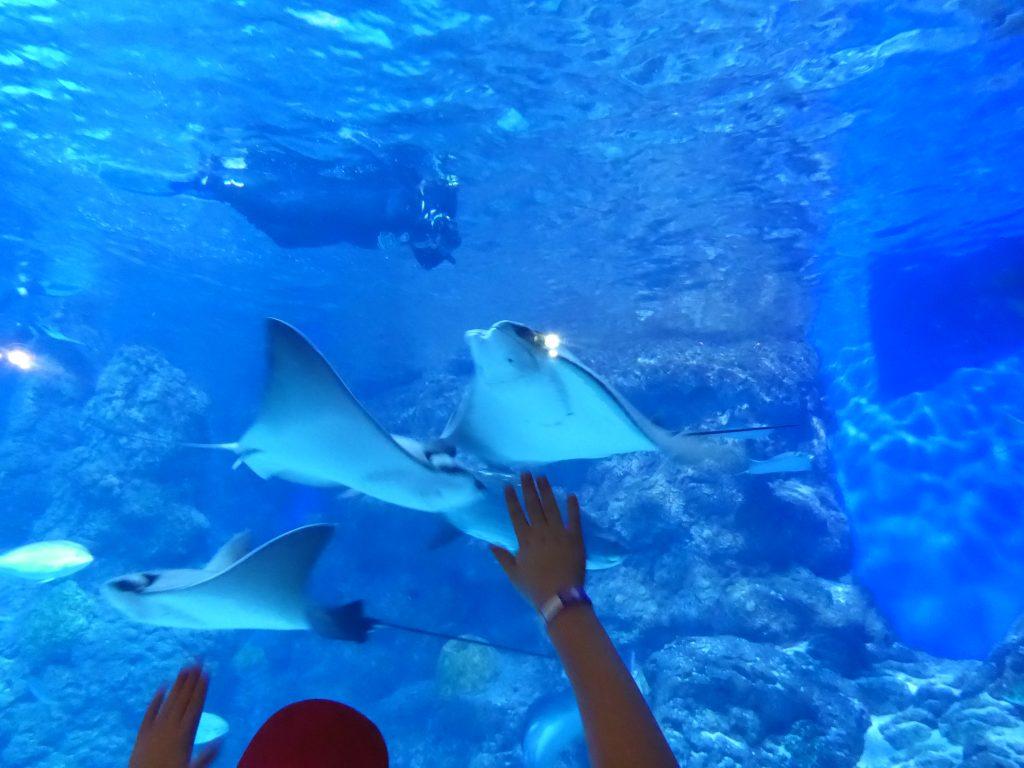 Shipwreck Exhibit at Aquarium