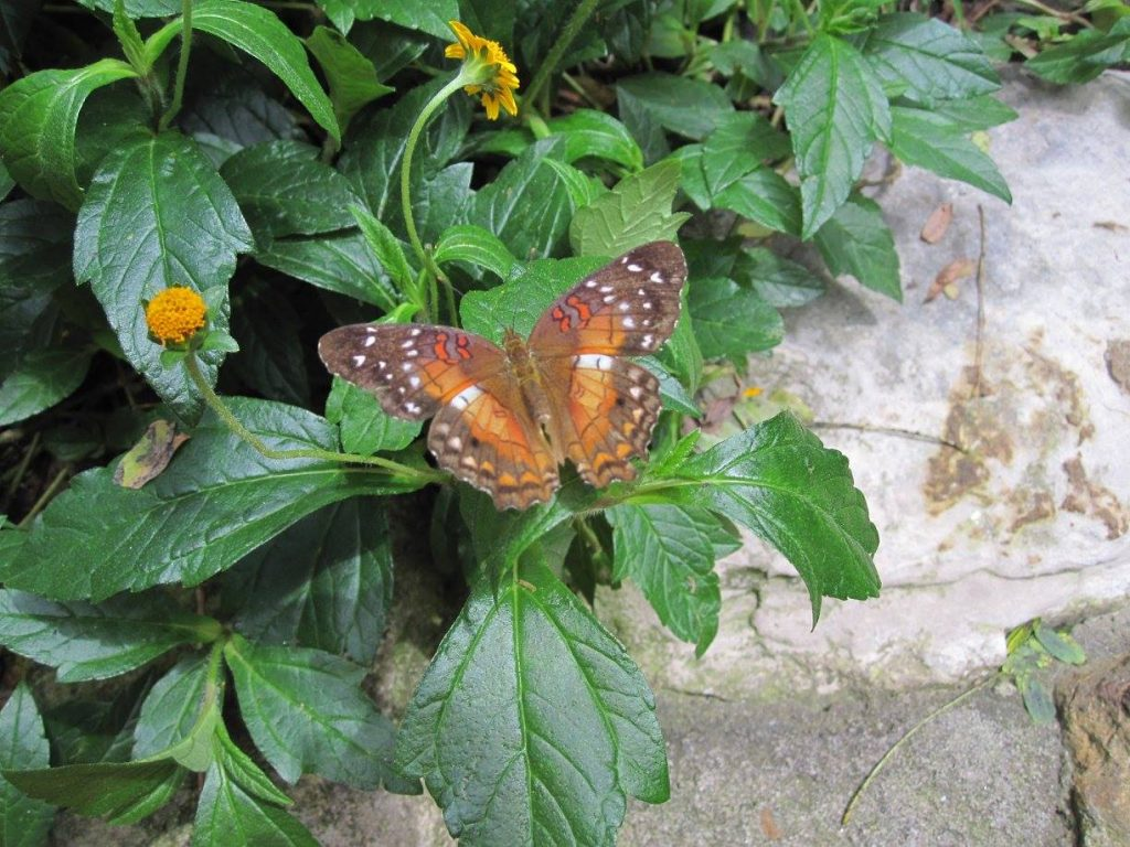Fun Family Adventures in Denver Butterfly Pavilion