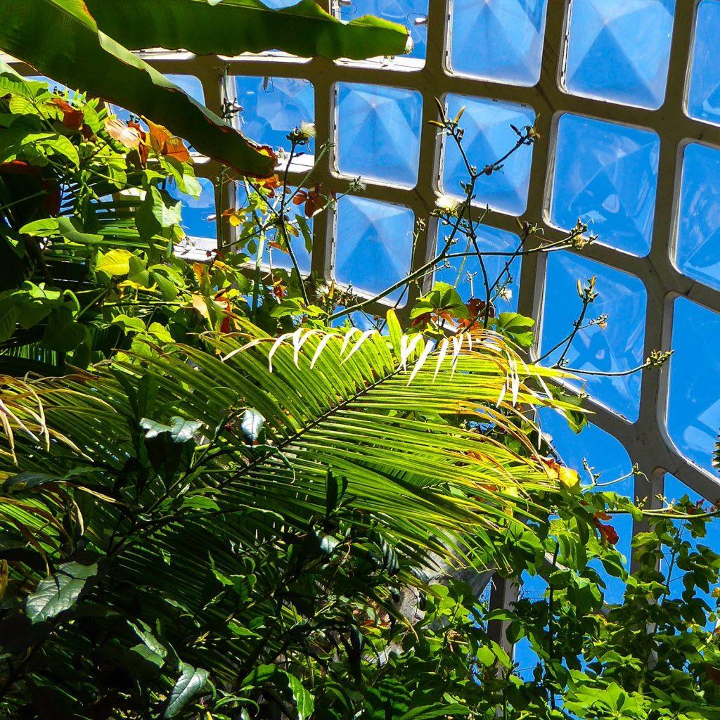 Denver Botanic Gardens Conservatory