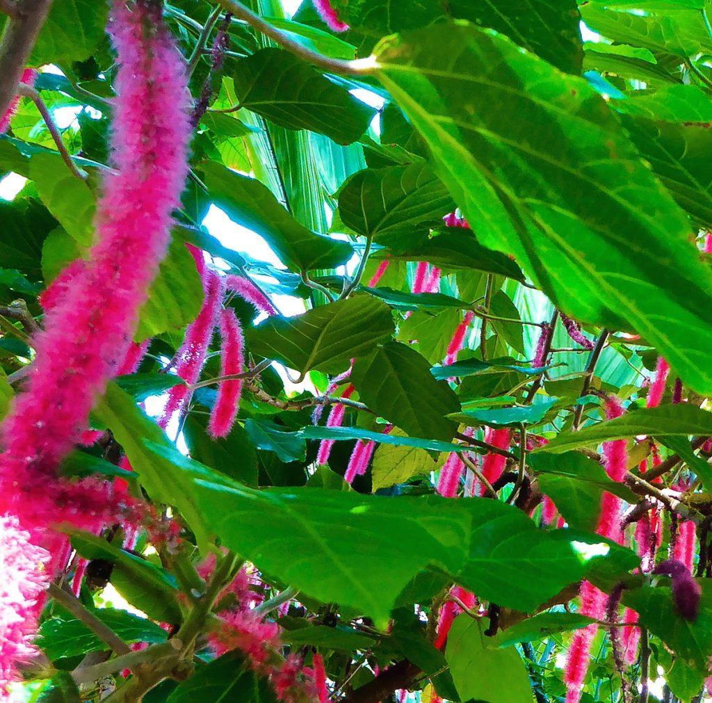 Denver Botanic Gardens Tropical Tree