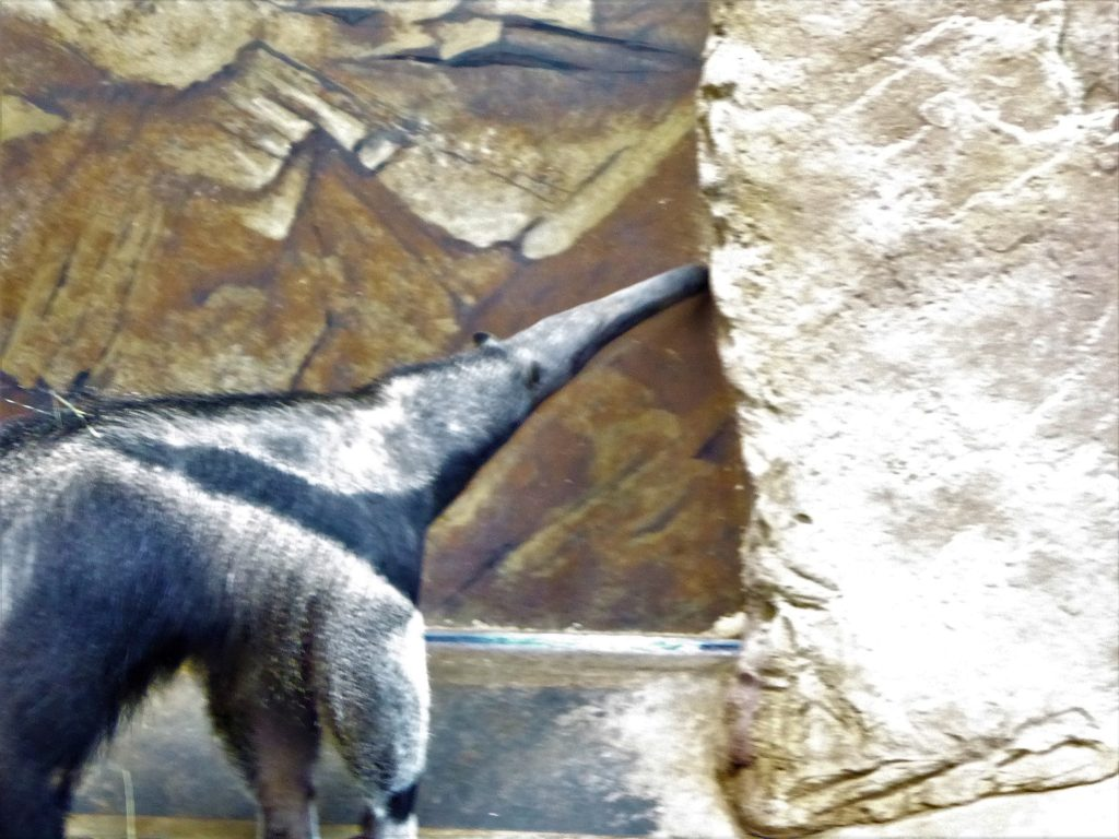 Rolling Hills Zoo anteater
