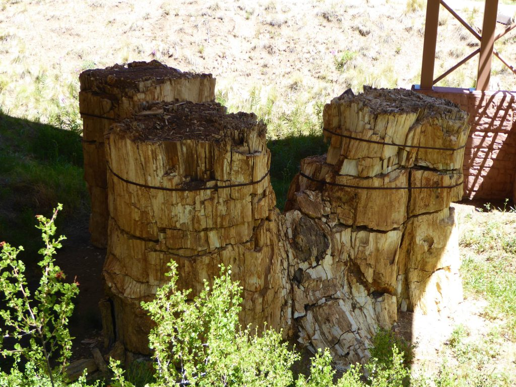 Florissant Fossil Beds Three Stumps
