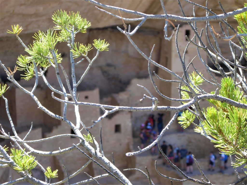 Ultimate Guide to the Cliff Palace Tour Tour Group