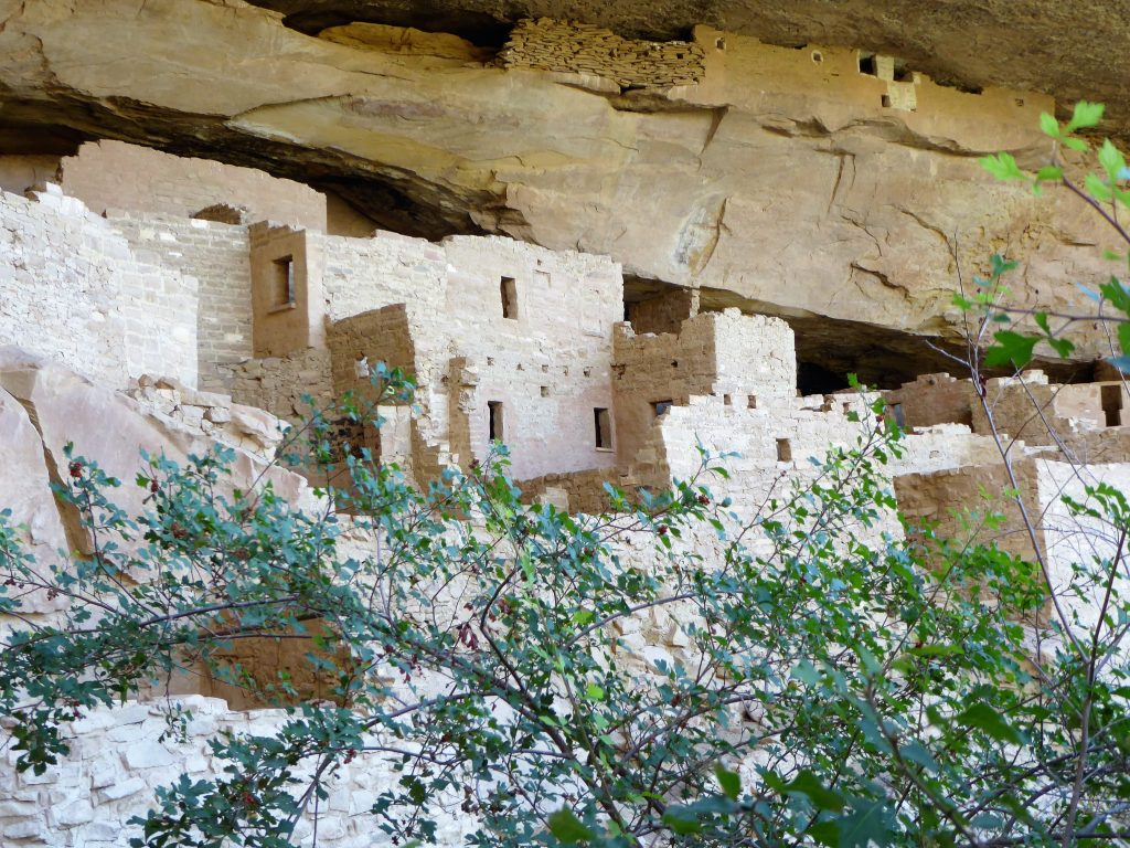 Ultimate Guide to the Cliff Palace Tour Bricks and Mortar