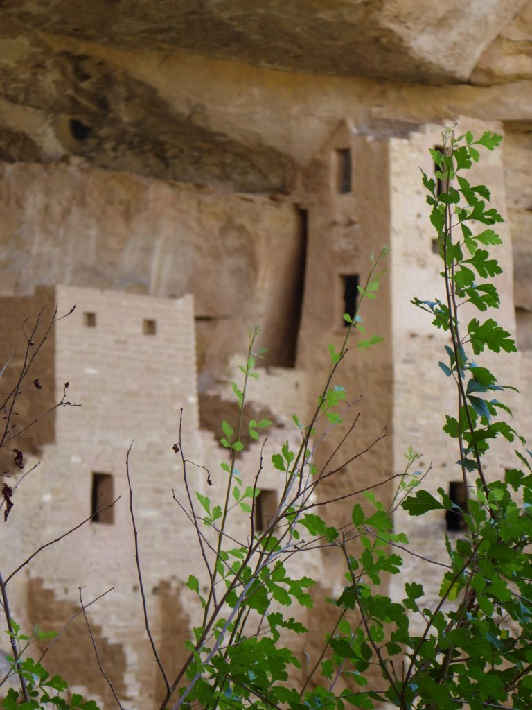 Ultimate Guide to Cliff Palace Tour