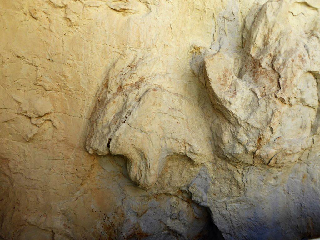 Dinosaur Ridge Triceratops Trail