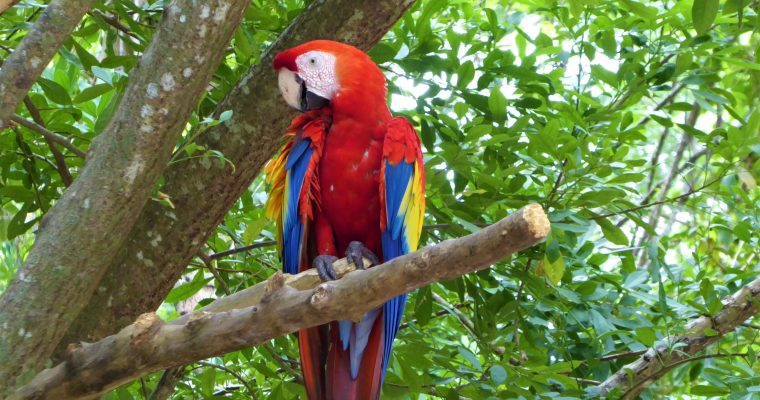 Ten Not-To-Be-Missed Activities at Gumbalimba Park on Roatan Island