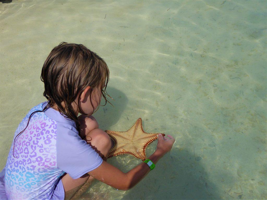 Starfish Island Belize Starfish Underside