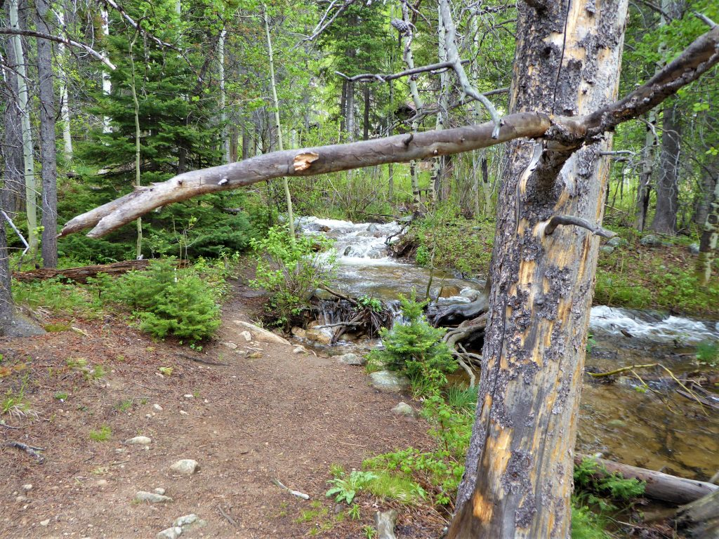 Wild Basin Trail RMNP