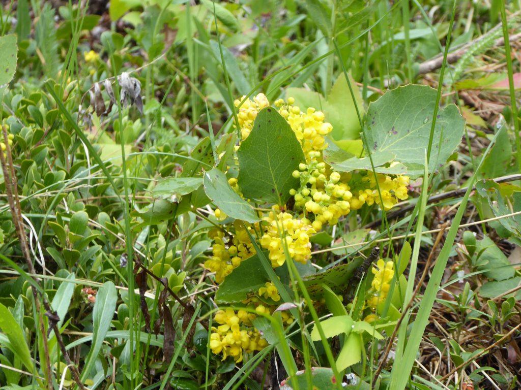 Rocky Mountain National Park Wildflower